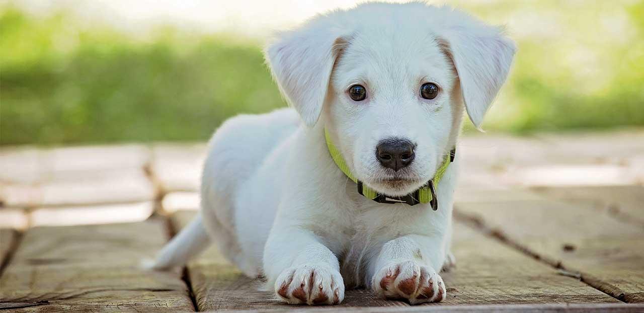 hunduppfodningsforsakring