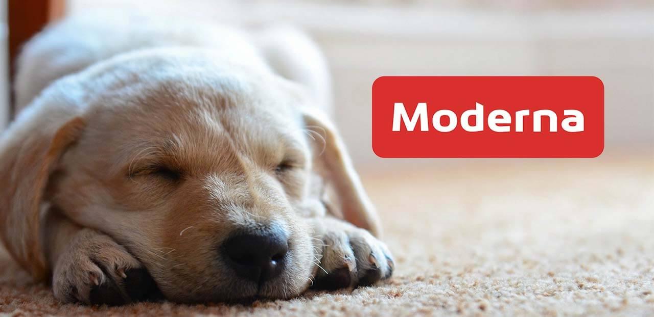 moderna hundforsakring