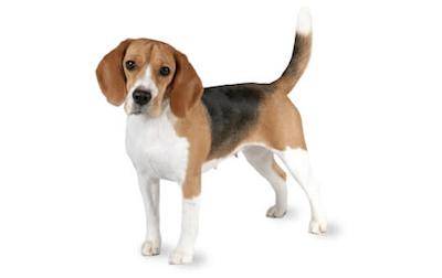 allt-om-hundforsäkring