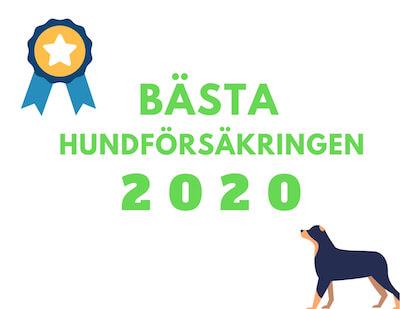 bästa hundförsäkringen 2020