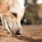 avmaskning-hund